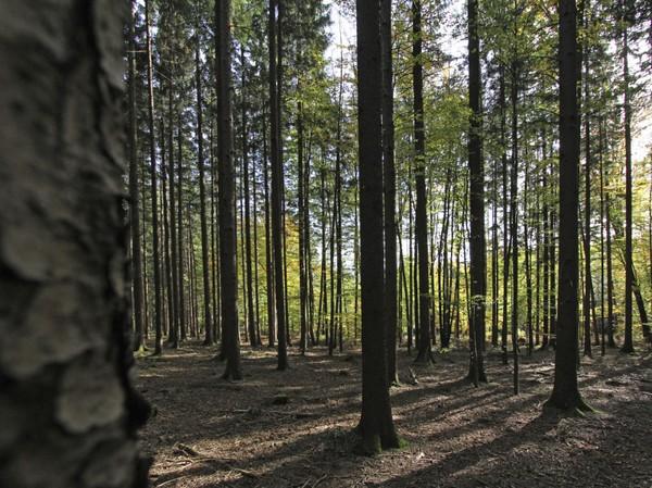 Black forest adalah satu dari lima hutan paling menyeramkan di dunia. (Thinkstock)