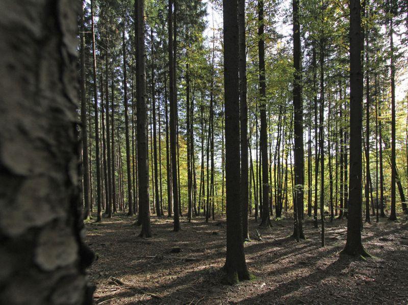 Foto: Dikutip dari BBC, Black Forest yang ada di Baden-Wurttemberg, Jerman ini termasuk salah satu dari lima hutan paling menyeramkan di dunia (Thinkstock)