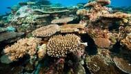 Palau, Negara Cantik di Pasifik Resmi Larang Tabir Surya