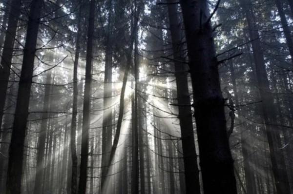 Usut punya usut, sepanjang akhir musim gugur sampai akhir musim dingin, matahari hanya menyinari black forest sampai pukul 14.00 waktu setempat. (BBC)