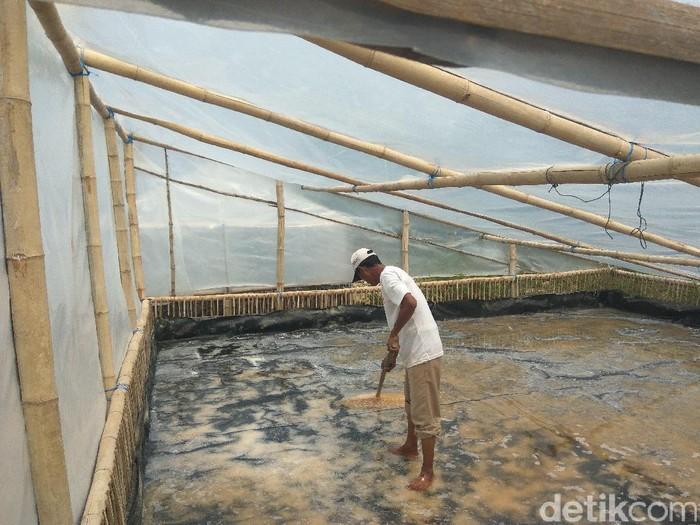 Petani Garam di Lamongan Tak Bergantung Musim/Foto: Eko Sudjarwo