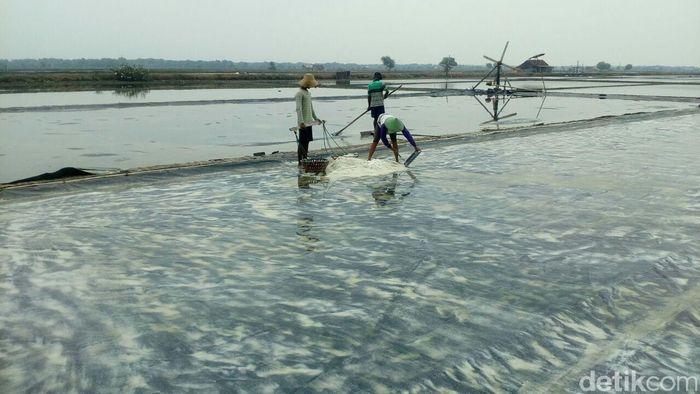 Beberapa petani mengolah ladang garam di Sidoarjo, Jawa Timur.