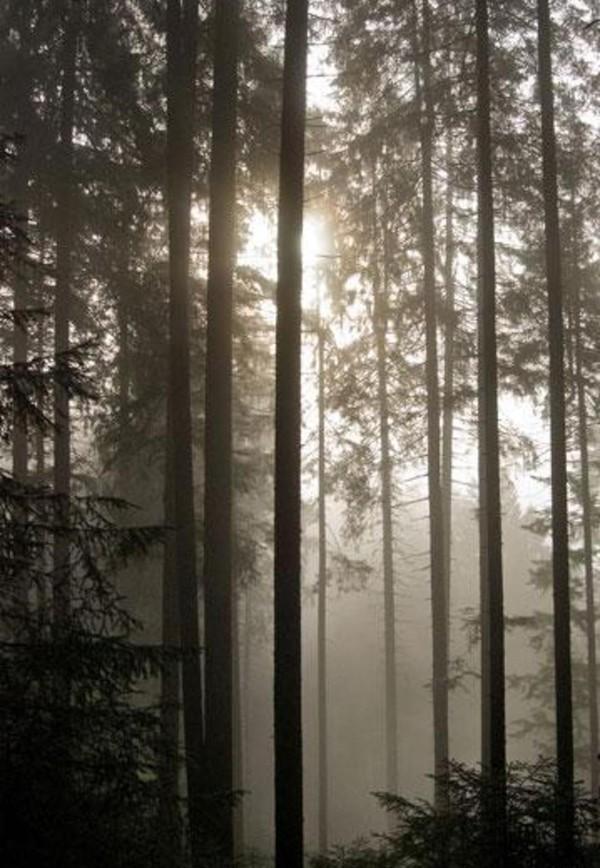 Lus hutan inisekitar 7.500 km persegi, panjangnya sekitar 150 km dan lebar 50 km. (Guido de Kleijn/BBC)