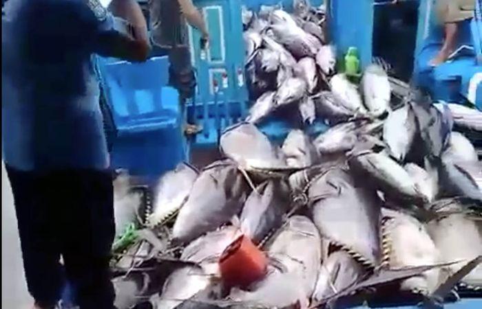 Sebuah kapal nelayan yang berisi ikan tuna bersandar di Pelabuhan Sendang Biru, Sesa Tambak Rejo, Kecamatan Sumbermanjing, Malang Selatan.