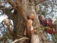 Penampakan beragam boneka dengan sosok yang tak terawat di Pulau Isla de las Munecas, plus kisah yang menyertainya, sungguh menciptakan nuansa penuh misteri.(Foto: Dok. www.isladelasmunecas.com)