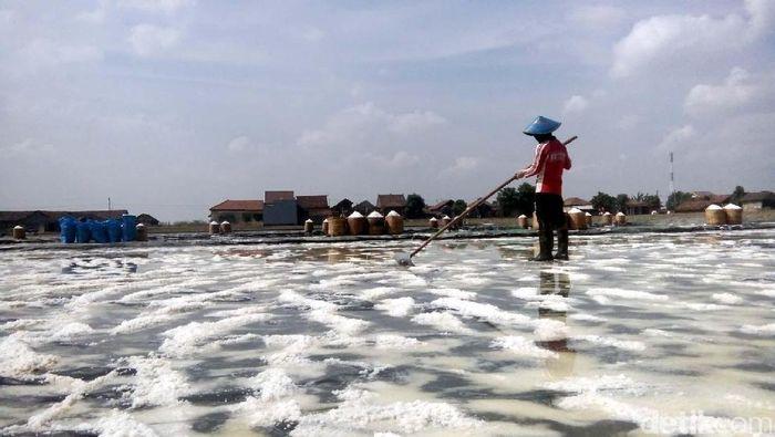 Ilustrasi lahan garam/Foto: Wikha Setiawan/detikcom