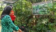 Serunya Warga Kebon Kosong Panen Sayur di Tengah Kota Jakarta