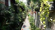 Sehatnya Kampung Iklim di Kebayoran Lama, Mau Obat Tinggal Petik