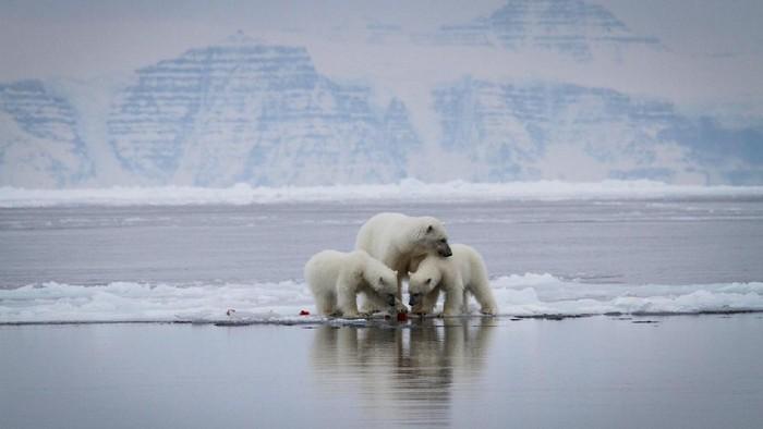 Greenland dan Arktik secara luas sedang berada di titik kritis akibat pemanasan global. Foto: (greenland.com)