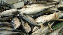 Tuna Jadi Andalan, Aceh Targetkan 2.459 Ton/Tahun