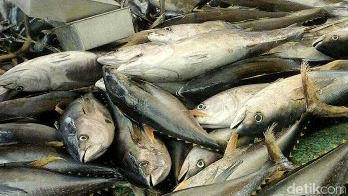 Menteri Susi Pudjiastuti, tak bisa berkata-kata dan terharu melihat tuna sebesar anak bocah hasil tangkapan nelayan Dago Tahuna Sangihe.Foto: Pool/Perum Perindo.