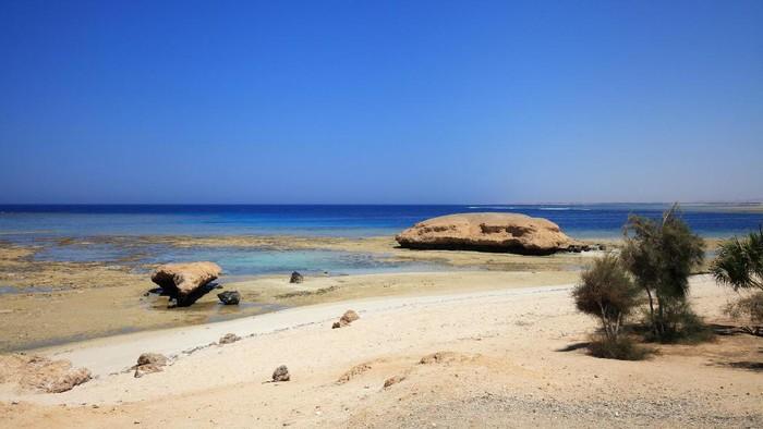 Pantai di Laut Merah