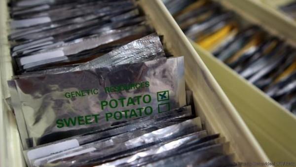 Svalbard Global Seed Vault juga dijuluki sebagai bank benih tanaman terlengkap di dunia (Anna Filipova/Reuters)