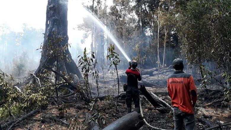 Kebakaran Hutan 77 Ha di Taman Nasional Danau Sentarum Padam