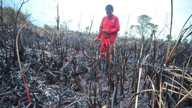 Samsung Didesak Putus Kerja Sama dengan 'Perusak' Hutan Papua