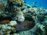 Pulau Moyo-Gunung Tambora Bakal Diresmikan Jadi Cagar Biosfer Dunia