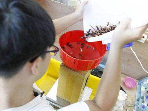 Jualan Kecoak, Mahasiswa Ini Raup Rp 87 Jutaan per Bulan