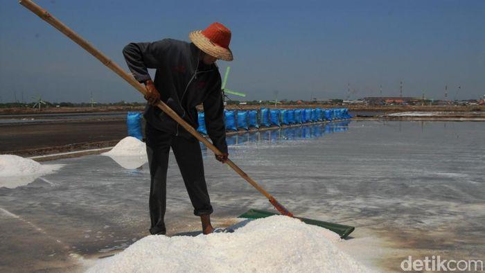 Lahan garam/Foto: Muhajir Arifin