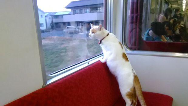 Kafe kucing Jepang