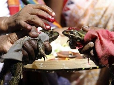 Cuma di India! Melihat Upacara Pernikahan Katak