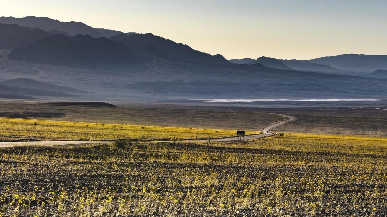 Bunga-bunga cantik yang bermekaran di Death Valley, AS