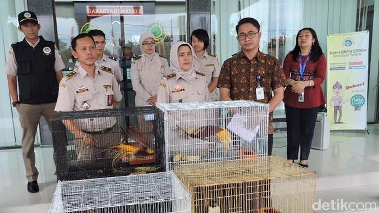 Penyelundupan 4 Ekor Burung Cenderawasih Digagalkan di Kualanamu