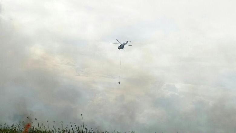 Hingga Maret, Luas Kebakaran Hutan dan Lahan di Riau Capai 2.830 Ha