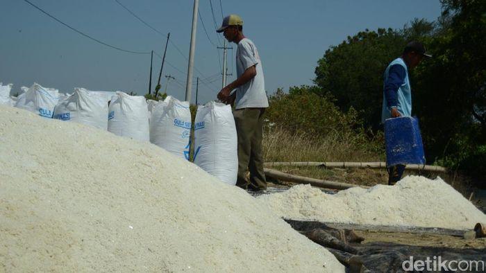 Petani garam di Rembang mulai panen garam, sehingga harga mulai turun.