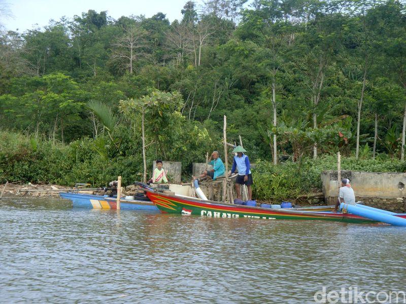 Kampung Laut di Kabupaten Cilacap, Jawa Tengah merupakan gugusan pulau-pulau kecil di Segara Anakan yang membentuk beberapa desa. Yakni Desa Ujung Alang, Desa Kleces, Desa Ujung Gagak dan Desa Panikel (Arbi/detikcom)