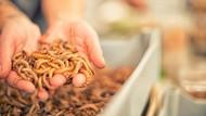Burger Ulat yang Gurih Bernutrisi Mulai Dijual di Swiss