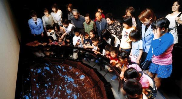 Traveler juga bisa belajar tentang Firefly Squid di Hotaru Ika Museum, Kota Namerikawa. Restoran di bagian atas museum yakni Kousai menyuguhkan menu Firefly Squid Tempura. Toko suvenir di museum ini juga menyuguhkan aneka olahan Firefly Squid dalam bentuk bubuk, kaleng, sampai permen (Dok. BBC)