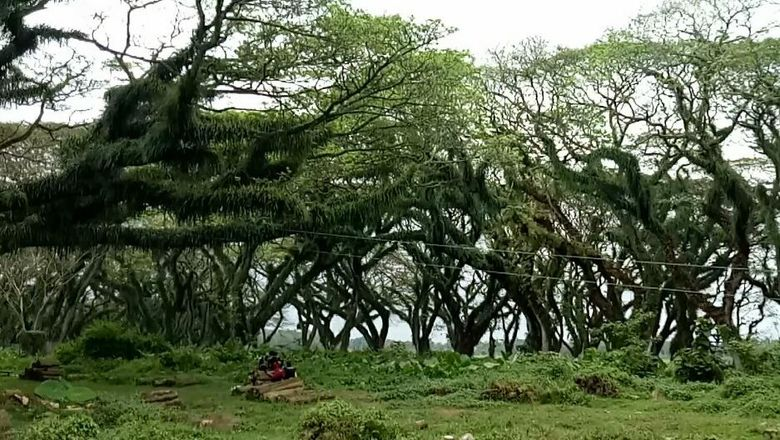 hutan mirip dalam film lord of the rings