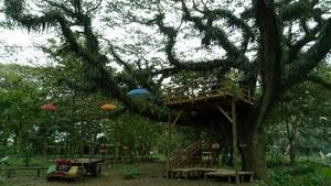 Hutan di Banyuwangi yang Seperti di Film Lord Of The Rings