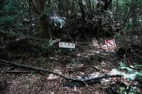 Oleh sebab itu, masyarakat Jepang percaya, ada banyak sekali arwah-arwah gentayangan di sana. Arwah-arwah yang akan mengajak untuk mati! (aokigaharaforest.com)