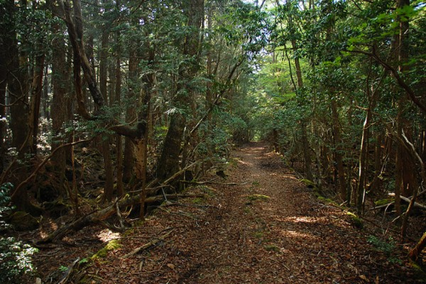 Menilik lebih jauh ke belakang, hutan Aokigahara diyakini dulu pernah menjadi tempat untuk tradisi Ubasute. Tradisi ini yakni membuang orang-orang tua atau manula yang sudah sakit-sakitan. Para manula tersebut ditinggalkan di Aokigahara, sampai meninggal dunia. (aokigaharaforest.com)