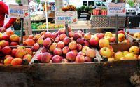 Rasanya Manis Segar, Apel Ternyata Punya 8 Fakta Unik yang Perlu Diketahui