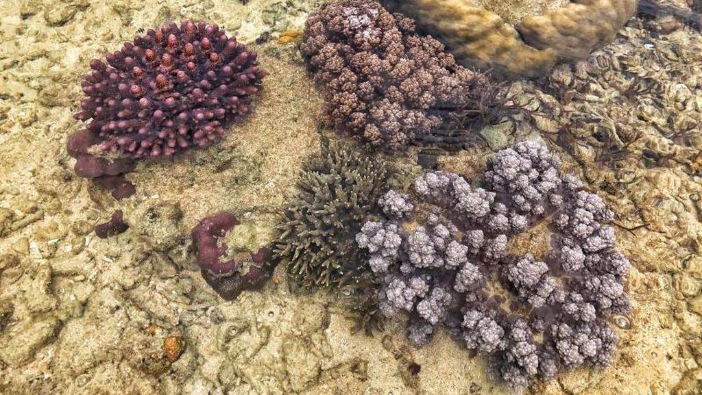 Snorkeling Tanpa Basah di Tolitoli