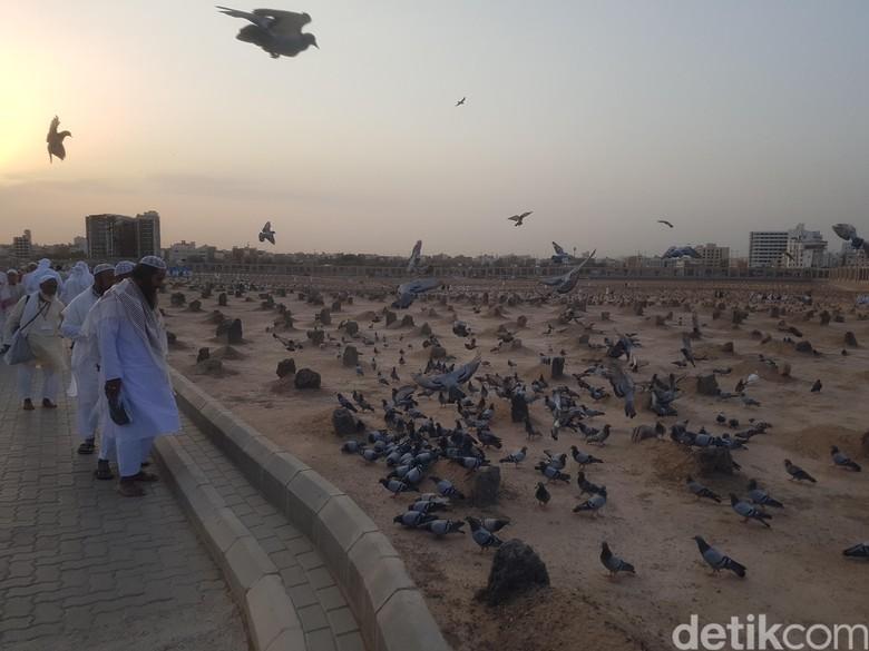Unduh 70 Foto Gambar Burung Merpati Sedih  Paling Bagus