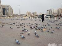 Kisah Merpati Megan Di Tanah Suci Yang Dipercaya Peliharaan Aisyah 100 Burung Dara