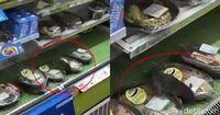 Tikus yang menyelinap ke dalam sela-sela bungkus makanan.