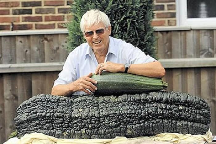 Sayuran Marrow yang merupakan salah satu jenis mentimun ini mengejutkan orang-orang di National Amateur Gardening Show di Somerset. Berat jenis sayuran ini mencapai 65 Kg. Ini ditanam oleh Ken Dade dari Norfolk dan ditetapkan jadi Guinness World record karena beratnya 3 Kg lebih besar dari pemecah rekor sebelumnya. Foto: Istimewa