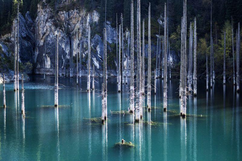 Danau ini berisi hutan dengan puluhan pohon cemara. Kok bisa ya? (Thinkstock)
