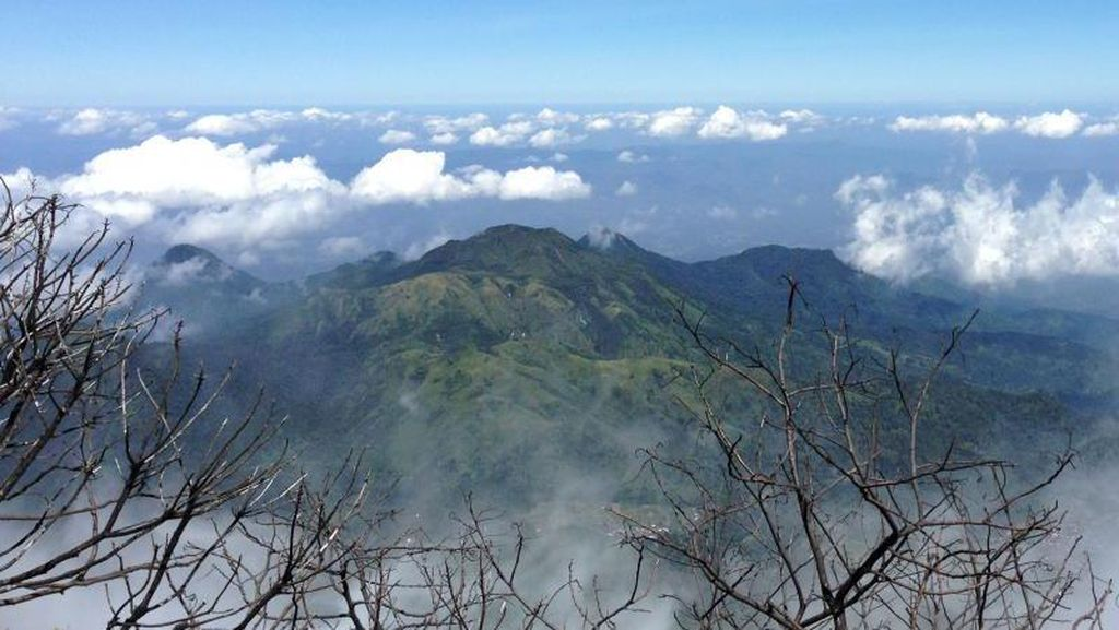 Selama 3 Hari, 30 Hektare Hutan Gunung Lawu Karanganyar Terbakar