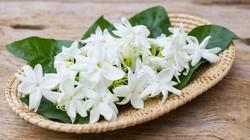 Walau hanya tercium lewat hidung atau terasa di mulut, aroma punya banyak manfaat bagi kesehatan. Berikut 7 aroma yang bisa kamu coba.