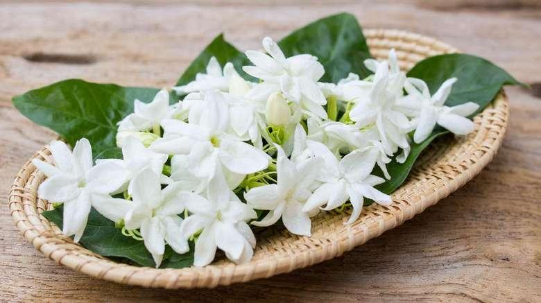 Ingin tidur yang nyenyak? Hiruplah wangi melati. Dan bunga melati juga disebut menurunkan kadar kecemasan dan meningkatkan kewaspadaan di siang hari. Atau, minumlah teh aroma melati. (Foto: iStock)