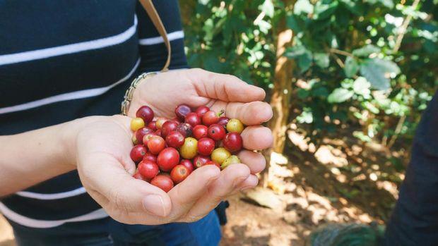 Indonesia punya banyak biji kopi yang berkualitas