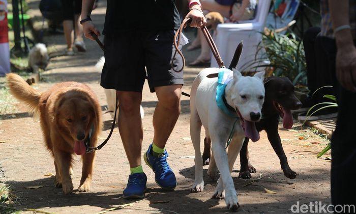 Para pecinta anjing berkumpul dan meramaikan Paw Day yang diselenggarakan Jakarta Animal Aid Network (JAAN) di Taman Langsat, Jakarta, Minggu (27/08/2017). Dalam acara tersebut digelar juga edukasi, cek kesehatan, serta tempat bermain bagi para anjing kesayangan.