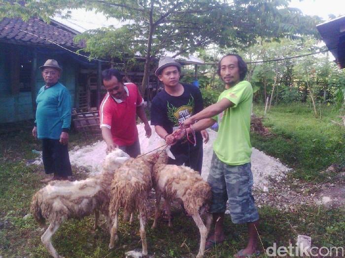 Penjualan hewan ternak melalui online
