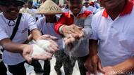 Jokowi Bakal Bentuk Tim Independen Atur Harga Gula