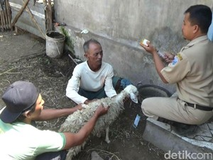 Petugas Veteriner Yogyakarta Datangi Lokasi Kambing Mati Misterius
